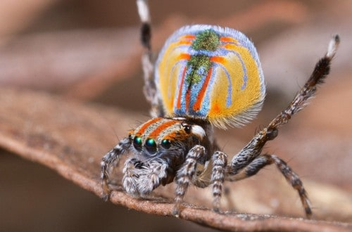 10 Of The Oddest Spiders In The World