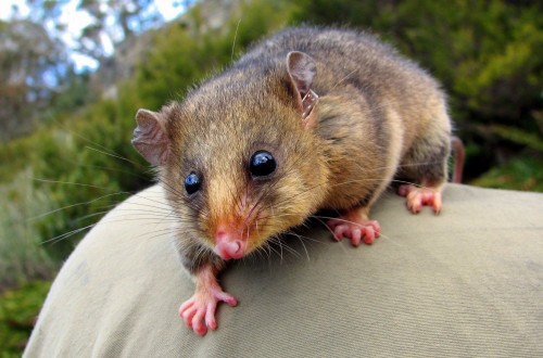 10 Previously Extinct Creatures Given A Second Chance