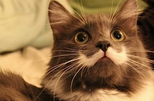 10 Shocking And Weird Facts About Cats