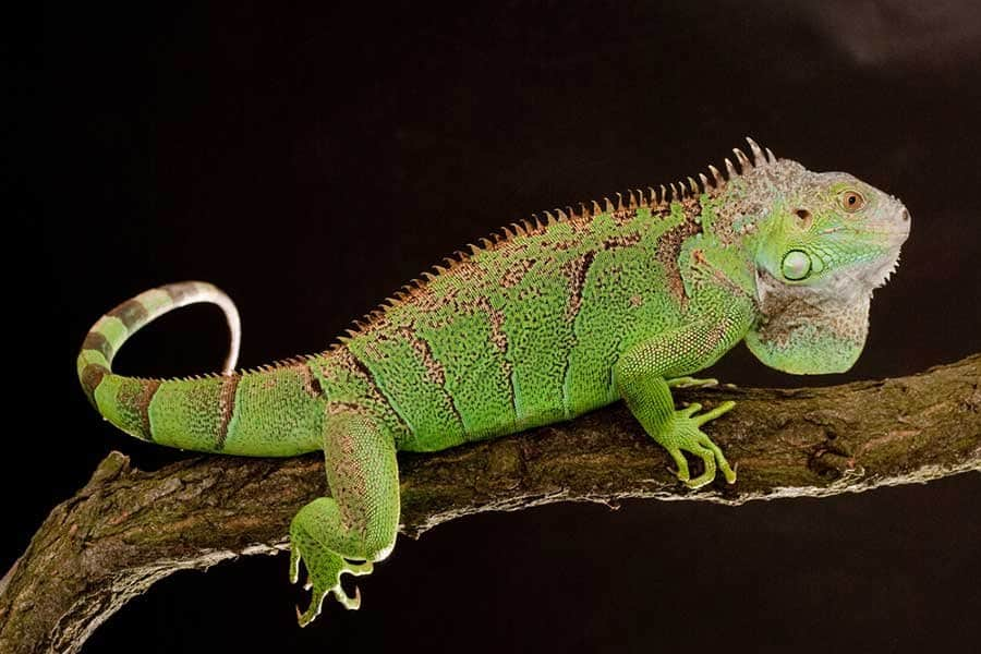10 Of The Most Dangerous Reptiles In The World