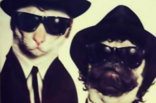10 Adorable Animals Trying To Be Action Stars