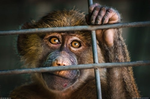 10 Animals That Were Arrested By Police