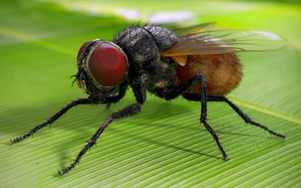 10 disgusting facts you didn t know about insects