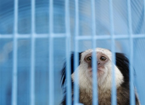10 Far-Fetched Cases Of Animal Smuggling