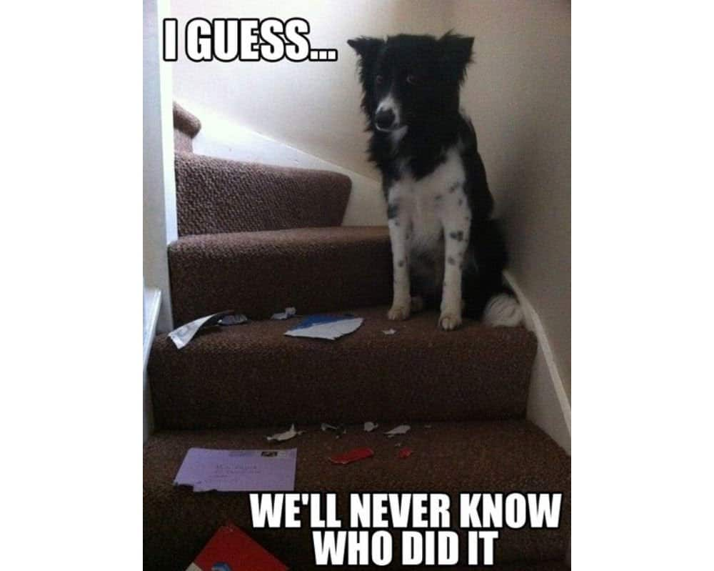 10 Of The Funniest And Most Destructive Dogs In World
