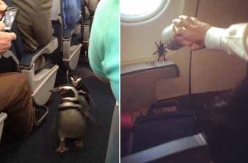 10 Of The Weirdest Things You'll Ever See On A Plane