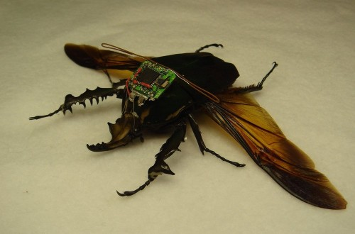 10 Shocking Ways Insects Have Been Used In Warfare