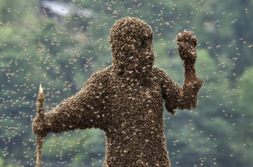 10 Species Known For Massive Swarms