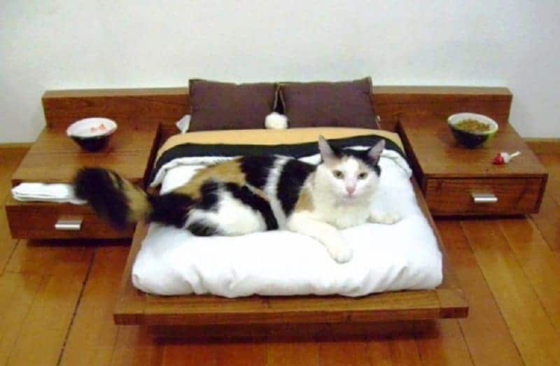 I Know What You Are Thinking, That This Looks Like A Mini Version Of A  Luxury Suite, And You Are Right, It Is Exactly That. Cats Definitely Love  The Good ...