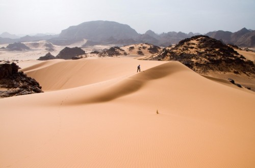 10 Bizarre Facts About The Desert