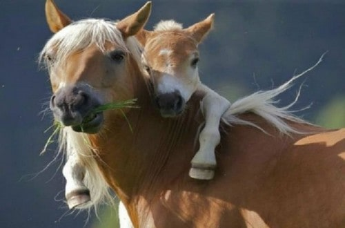 10 Cute Pictures Of Animals With Their Kids