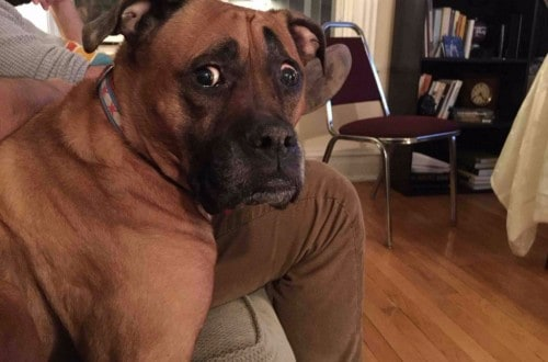 10 Dogs Who Are So Confused By The World