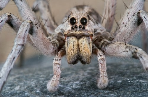 10 Facts About Spiders That'll Make Your Skin Crawl