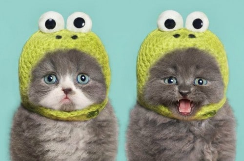 10 Hilariously Adorable Photos Of Cats With Hats