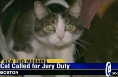 10 Of The Funniest News Captions Ever