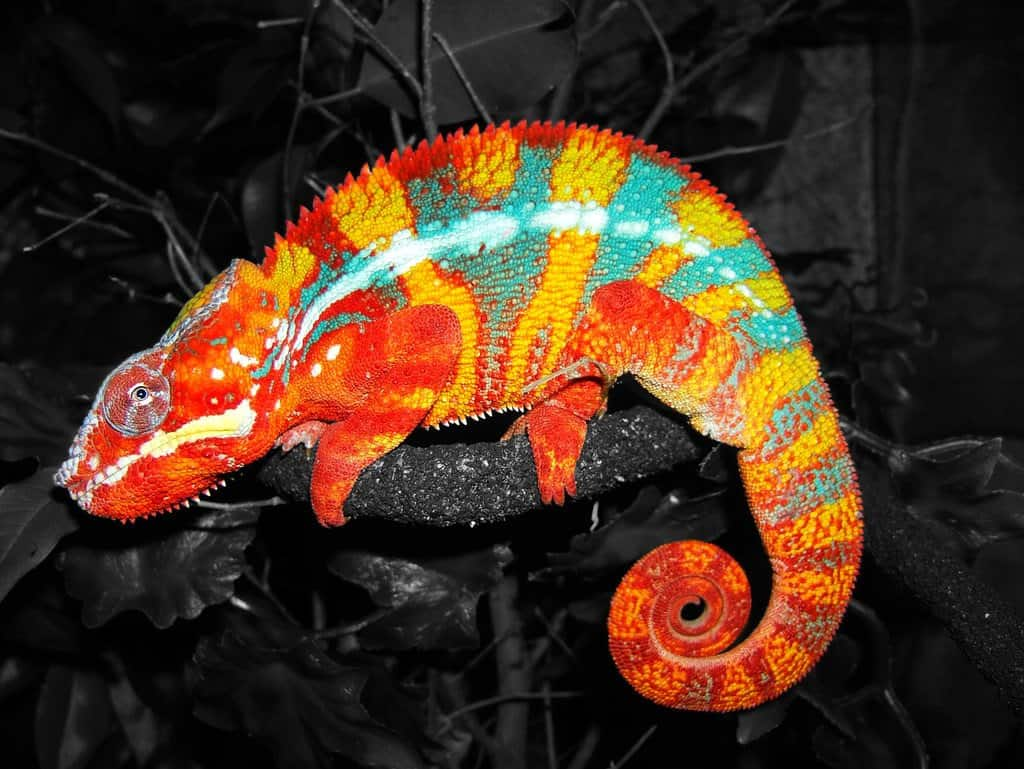 10 Of The Most Colorful Animals In Existence