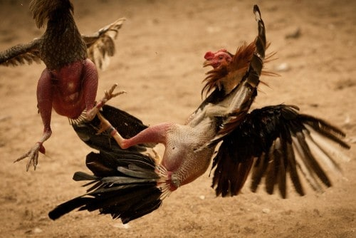 10 Shocking Times Where Animals Killed Humans