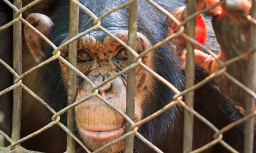 10 Startling Truths About Animal Testing