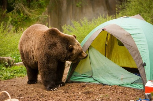 10 Useful Tips For Surviving In The Wild