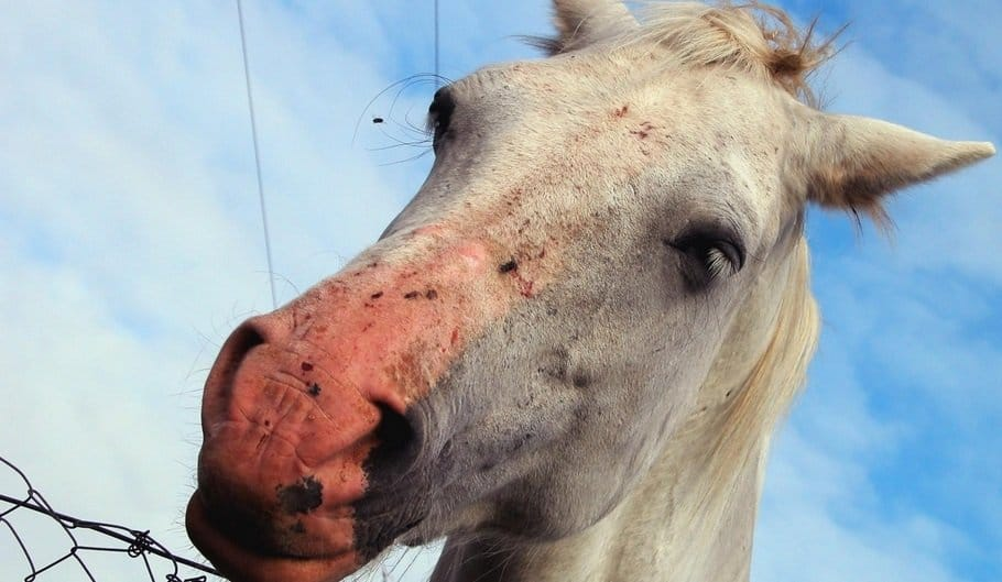 10 Facts You Never Knew About Horses