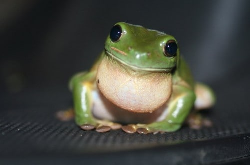 10 Frog Species With Freaky Powers