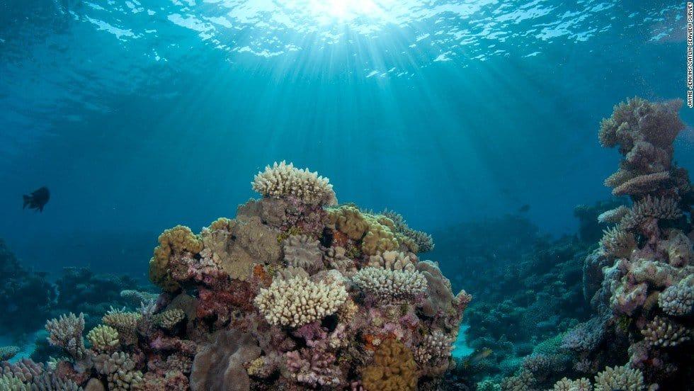 The Ozean