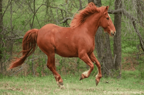 Man Who Had Sex With A Horse Said It Gave Consent By Winking
