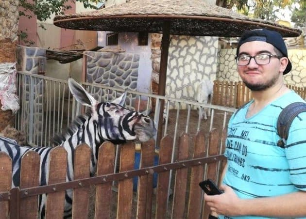 Cairo Zoo Attempts To Pass A Painted Donkey As A Zebra